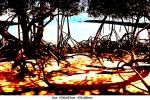 cobourg-mangrove