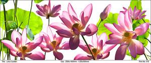 lotus-garden